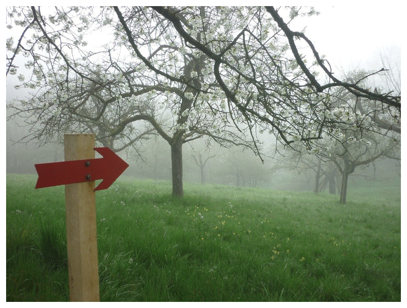 A sign with a red arrow pointing inside a foggy orchard